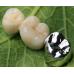 歯科コバルトクロムPFMクラウン